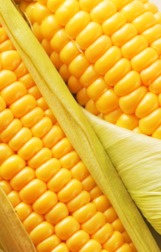 首页左侧玉米广告